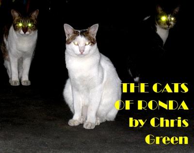 thecatsofronda2